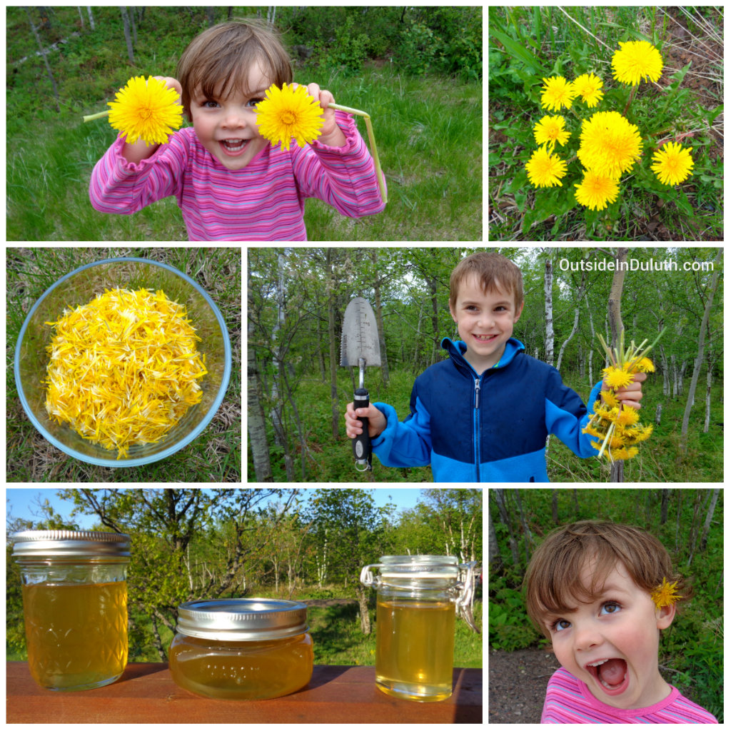 Dandelion Jelly Day