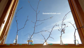 Bring Spring Inside with Budding Branches